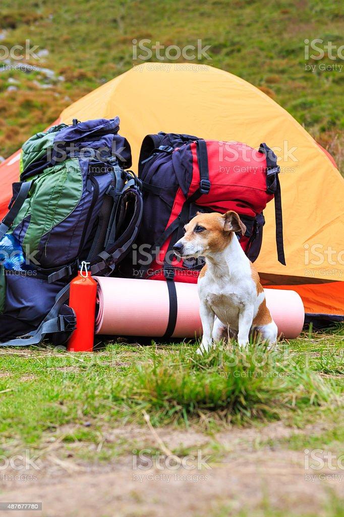 Dog camping. stock photo