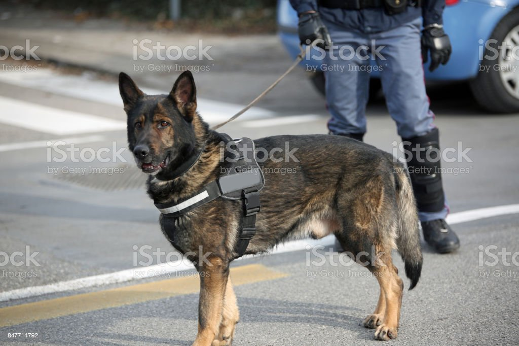 Dog Canine Unit of the police and a police officer in uniform du stock photo