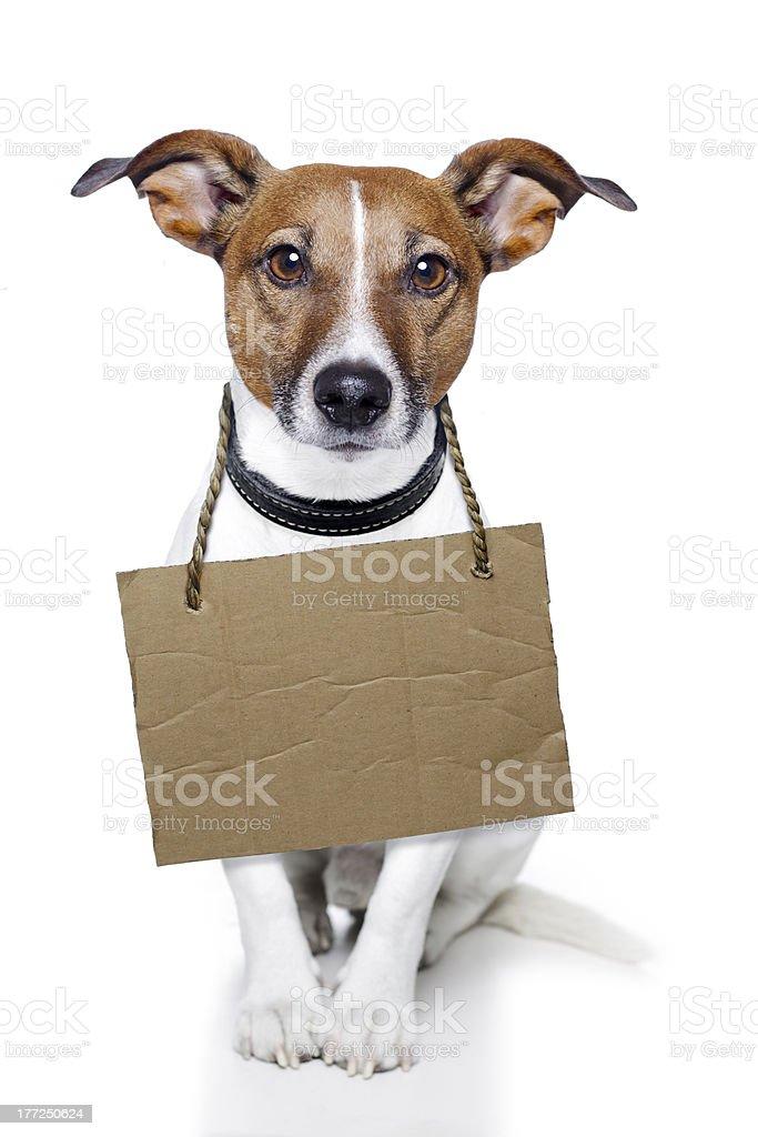 dog cardboar neutral royalty-free stock photo