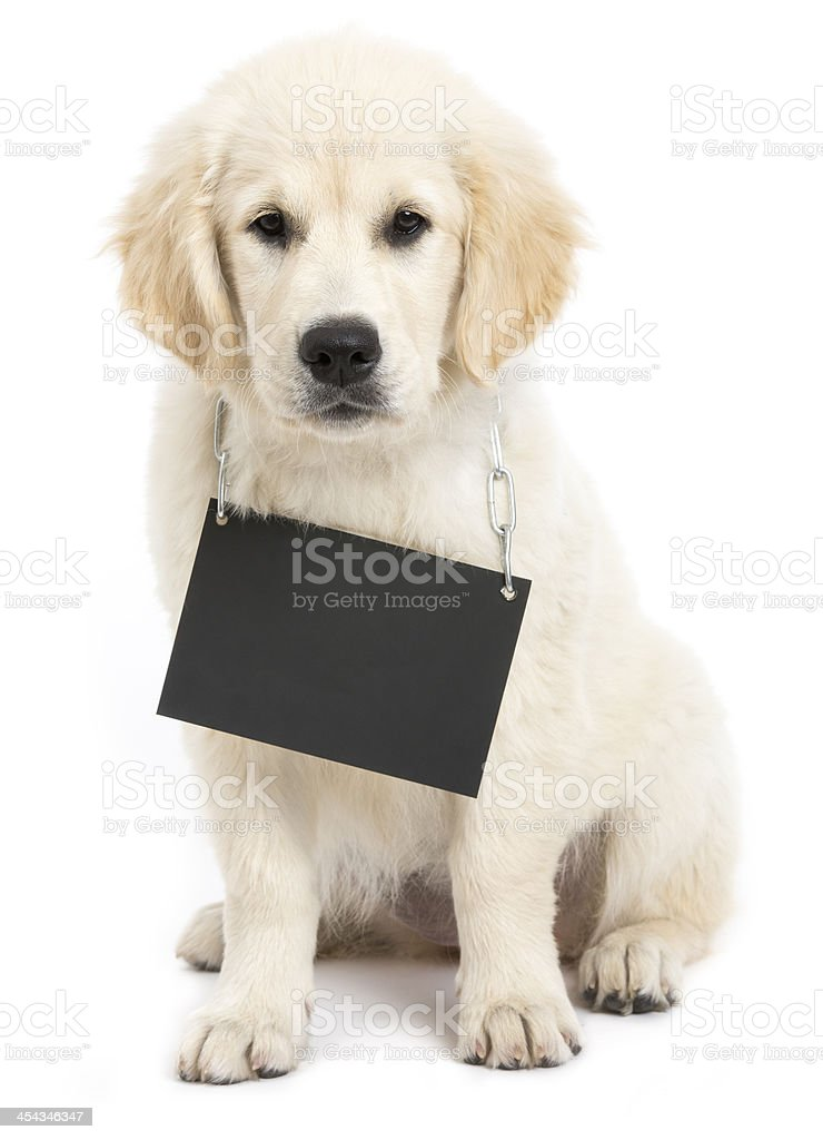 dog cardboard neutral royalty-free stock photo