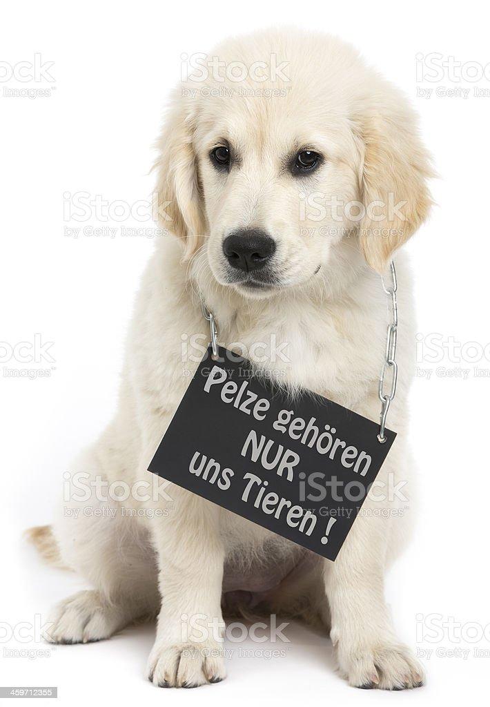 dog cardboard stock photo