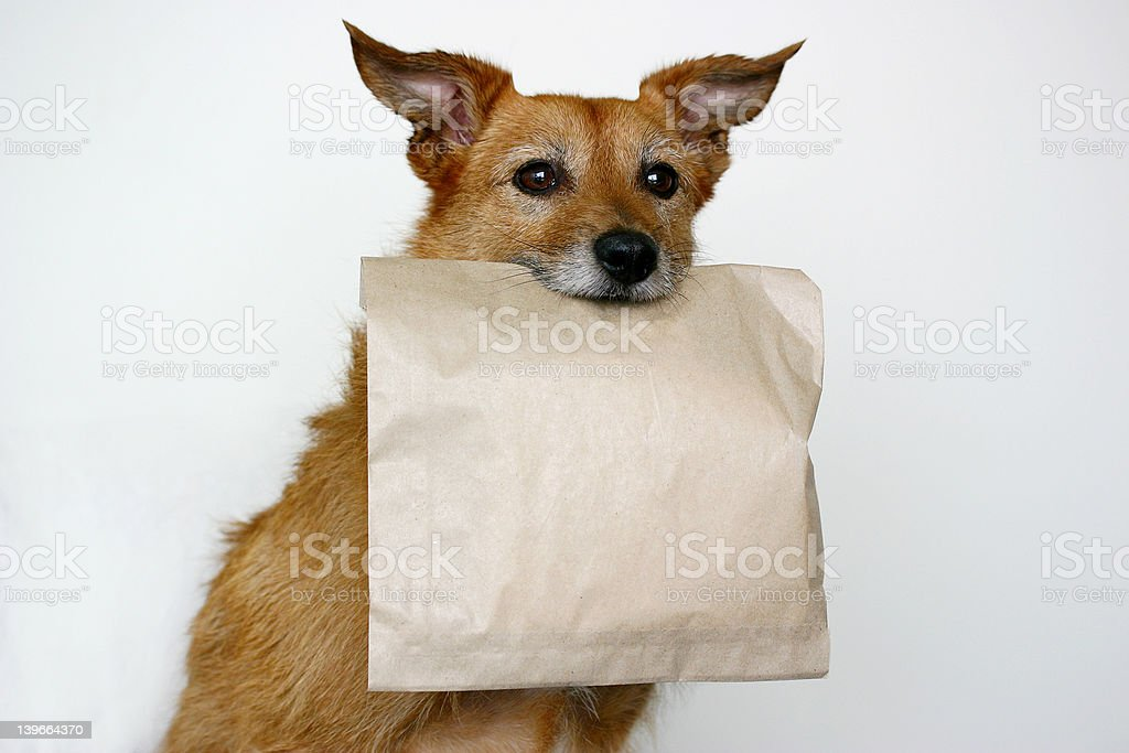 Dog carrying a plain brown bag royalty-free stock photo