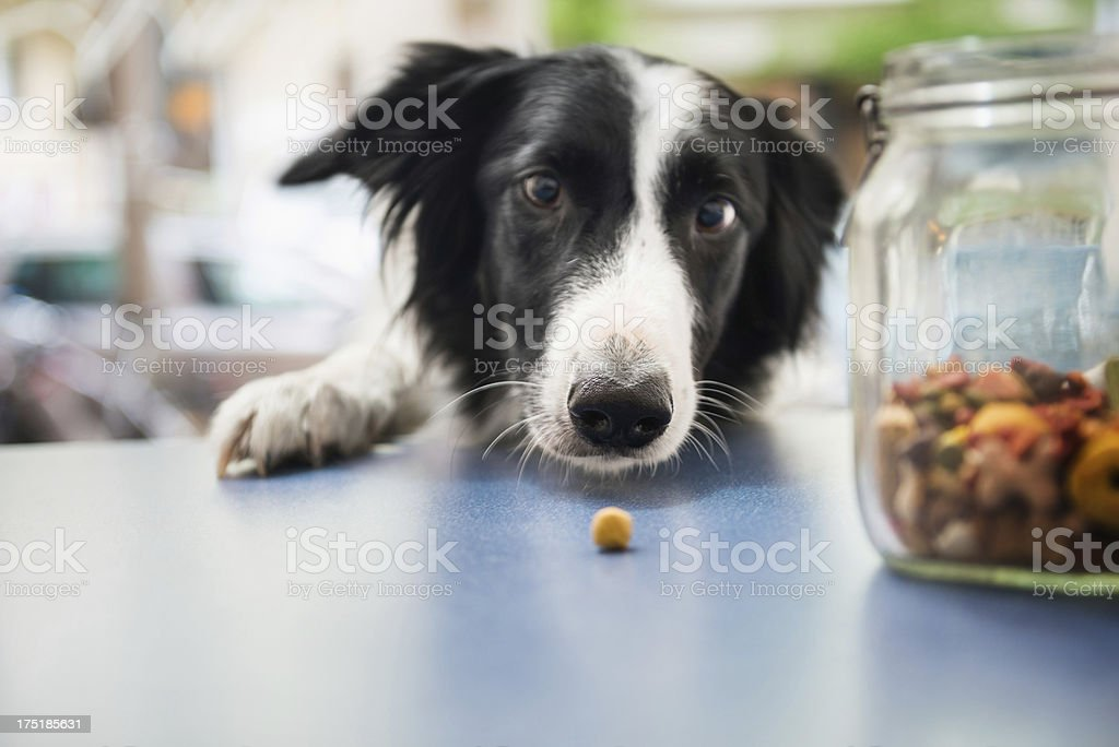 Dog Catching Snack stock photo