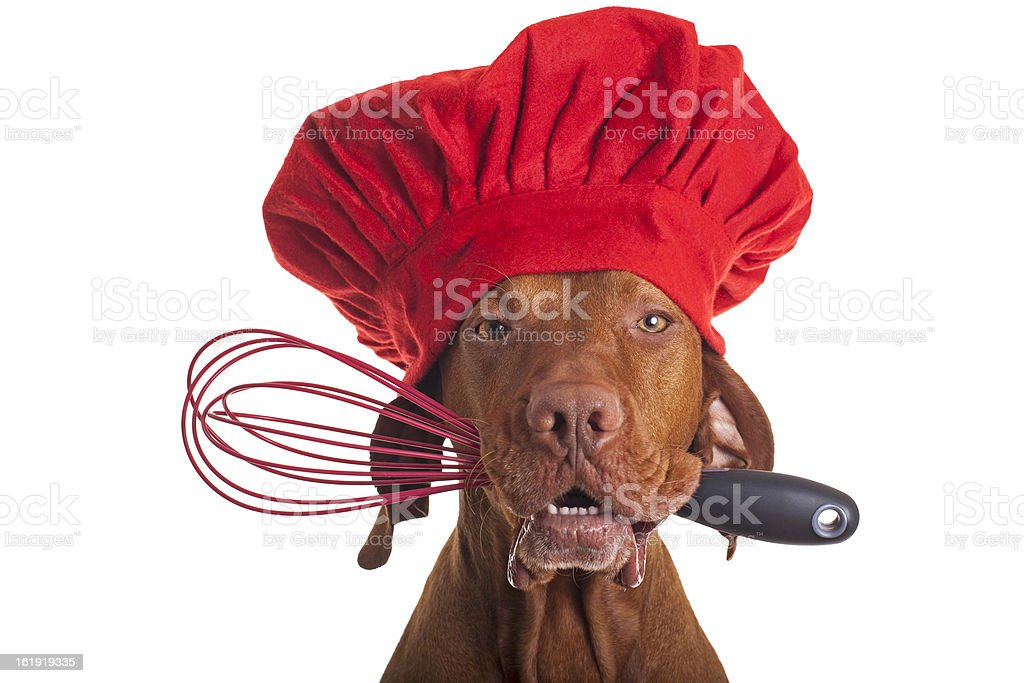 dog chef with egg beater stock photo