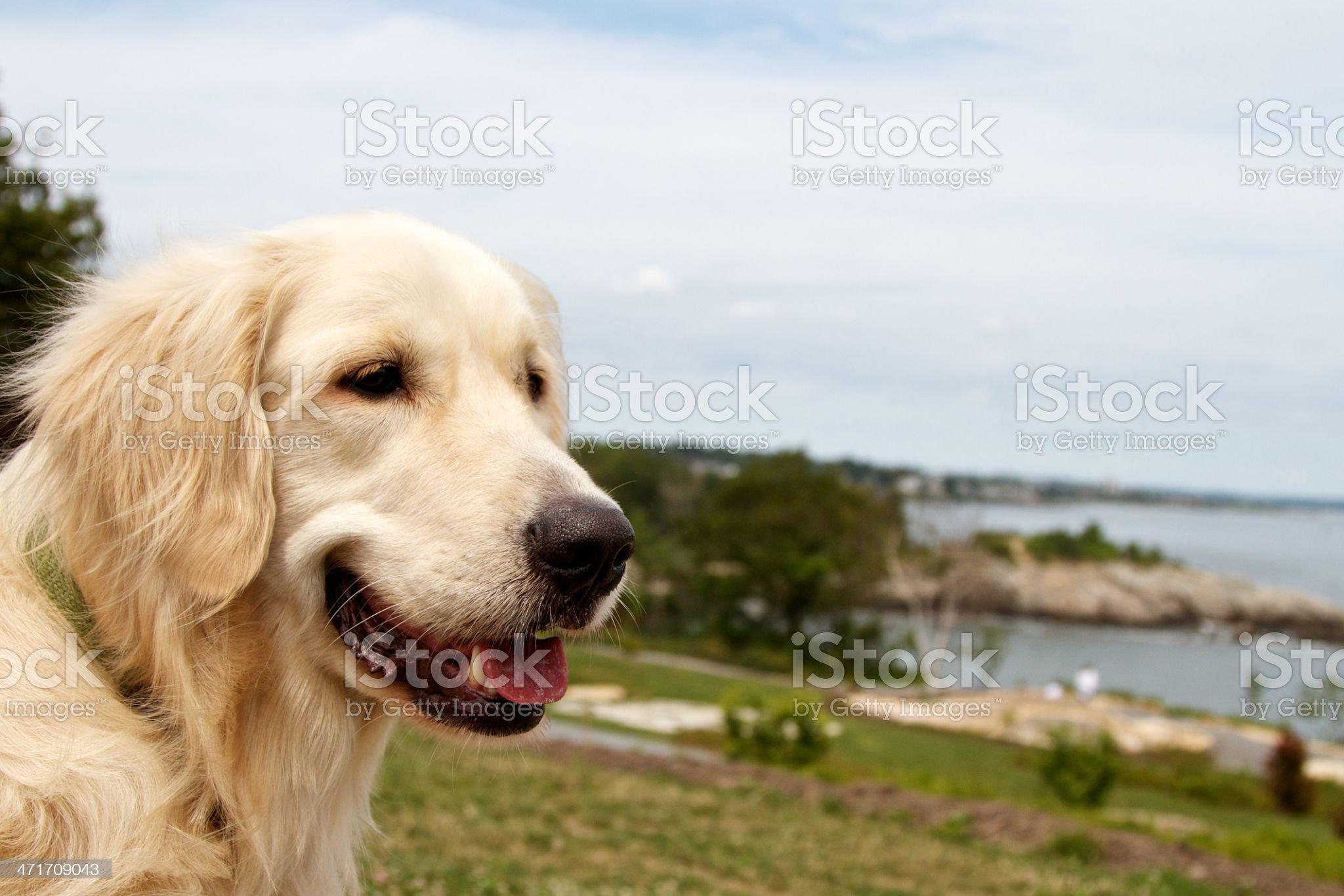 Dog chillin royalty-free stock photo