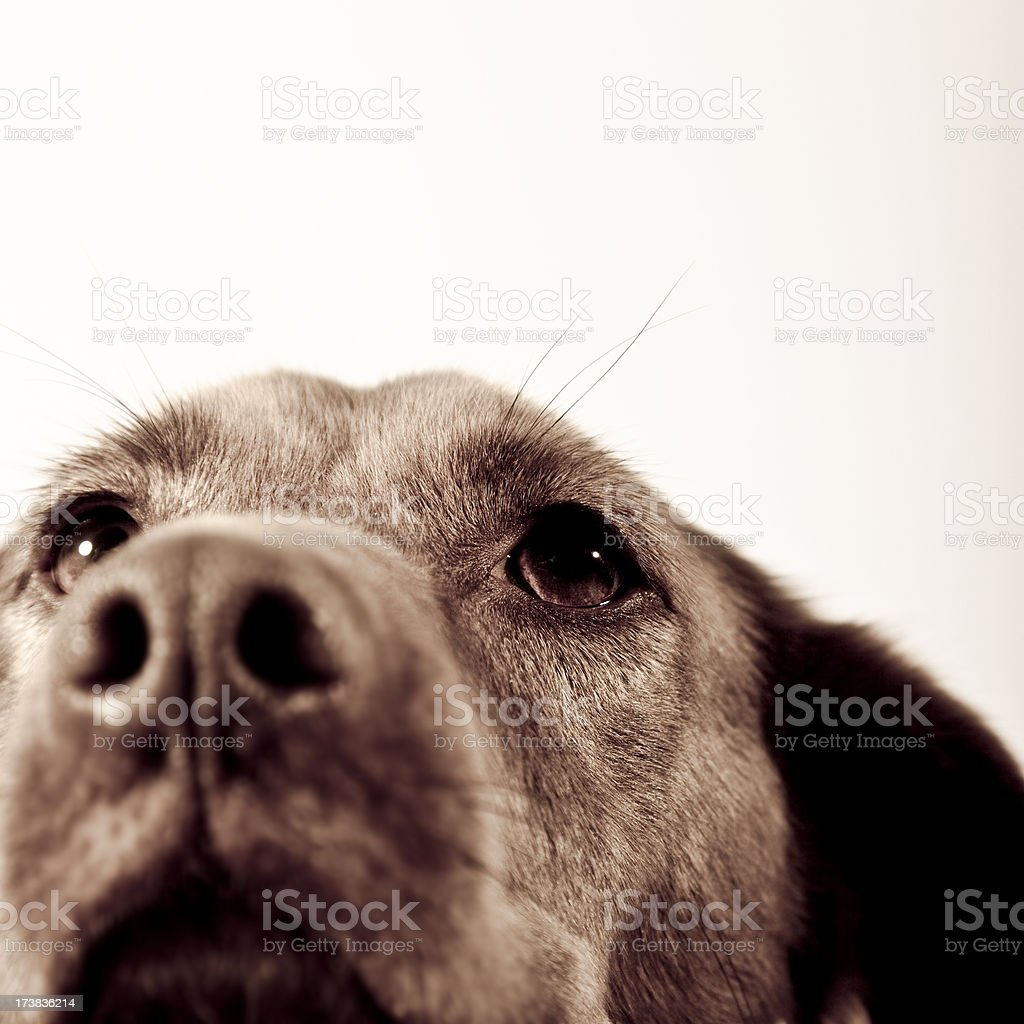 dog close up royalty-free stock photo
