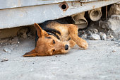 dog comes out from under the rubble of collapsed  construction