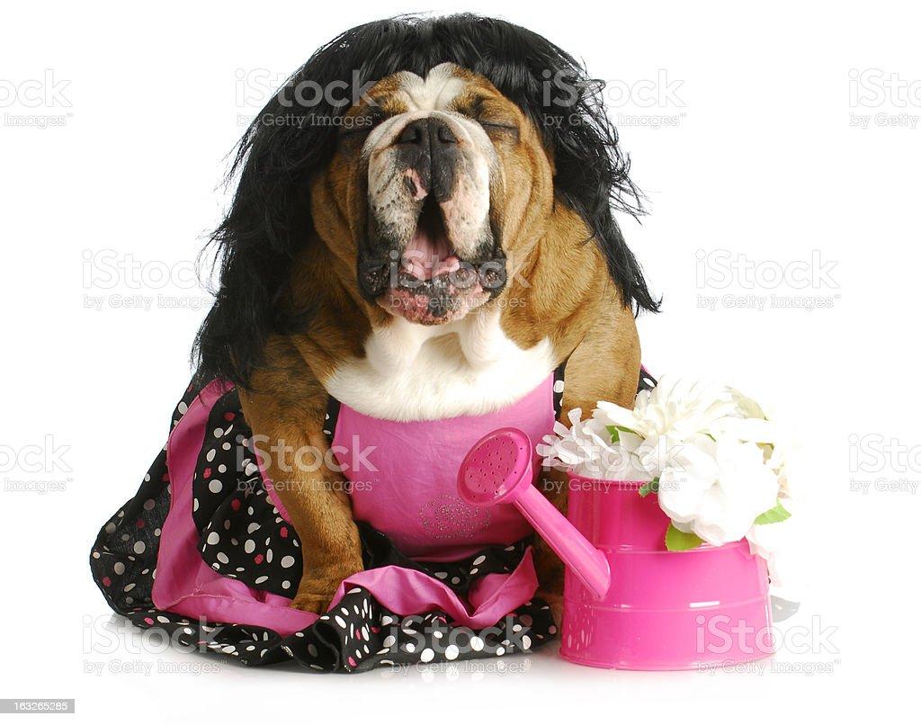 dog complaining royalty-free stock photo