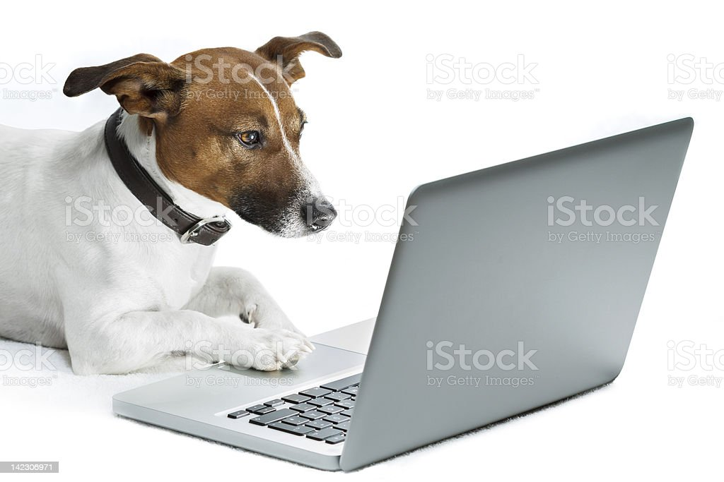 dog computer stock photo
