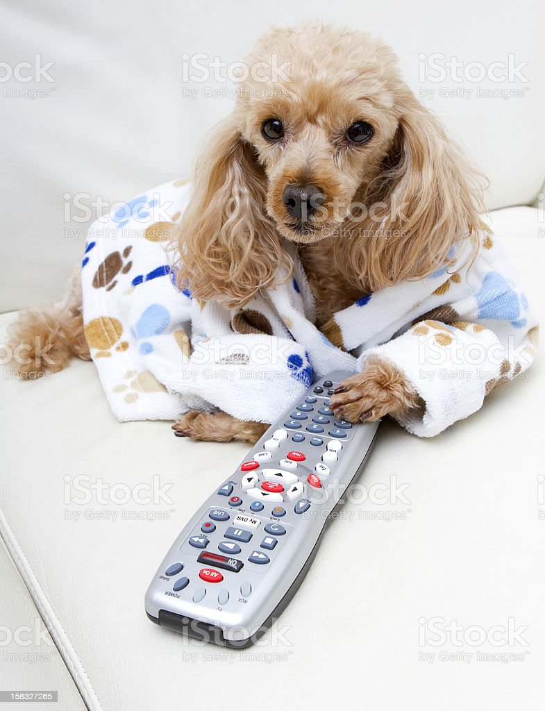 Dog Controls The Remote royalty-free stock photo