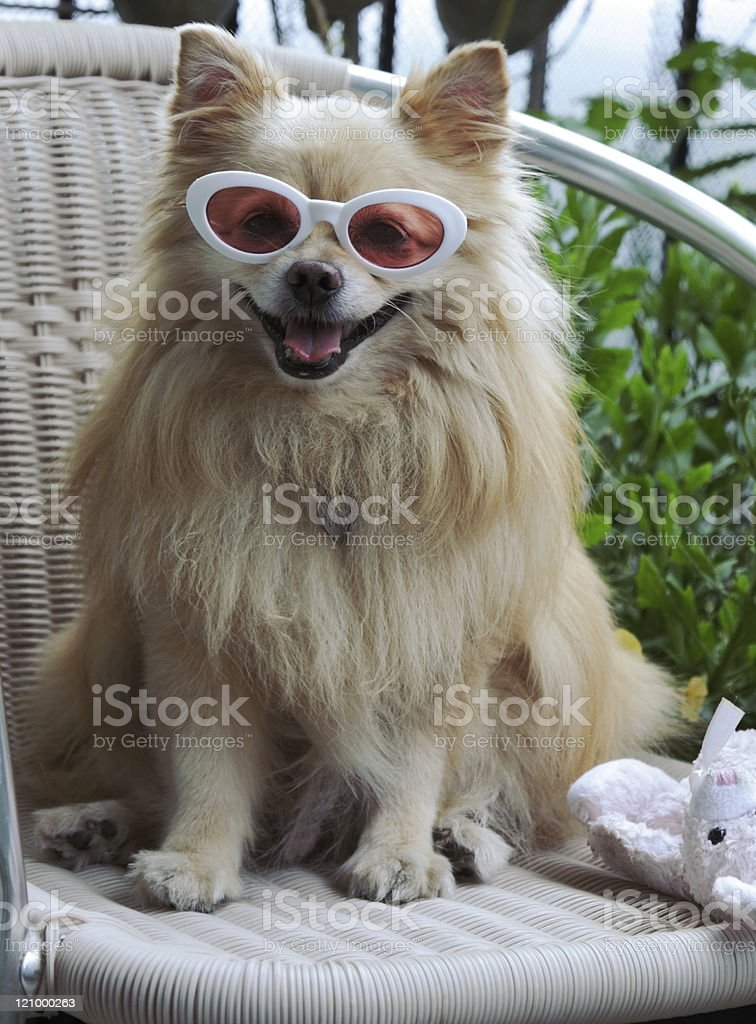 Dog cooling off royalty-free stock photo