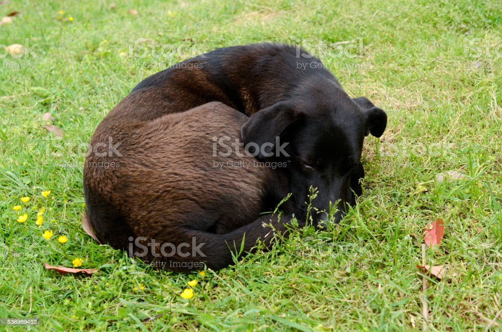 dog curled up and asleep in the green grass stock photo