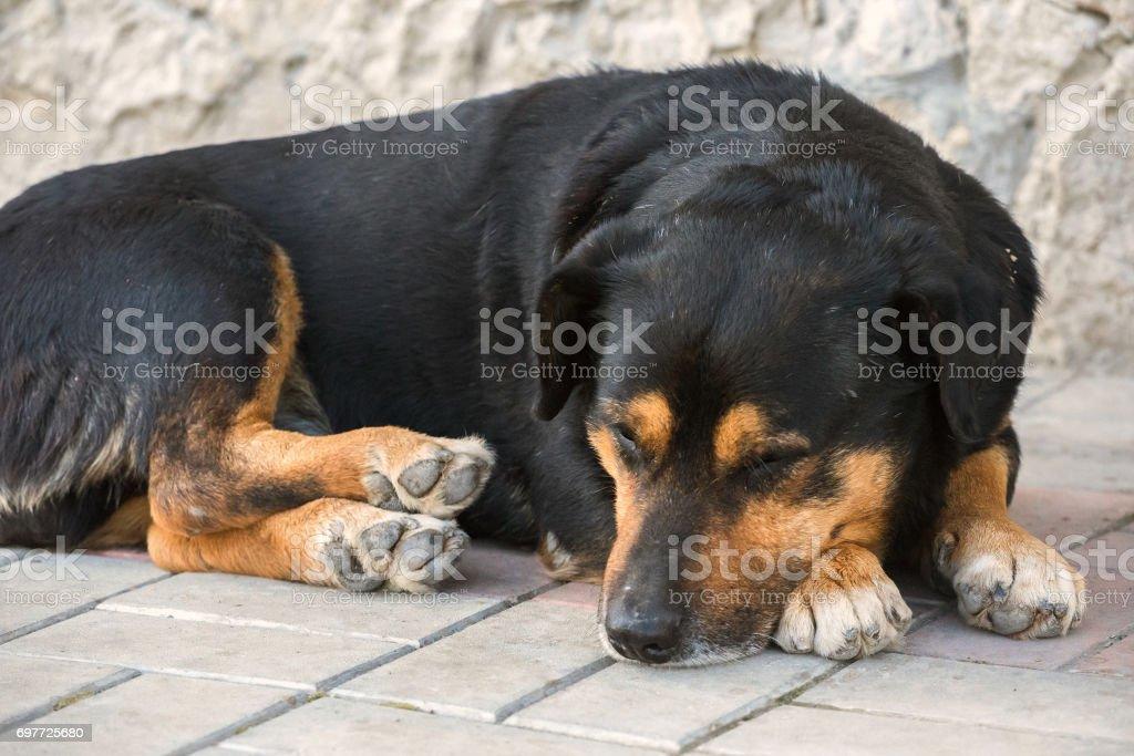dog cute asleep stock photo