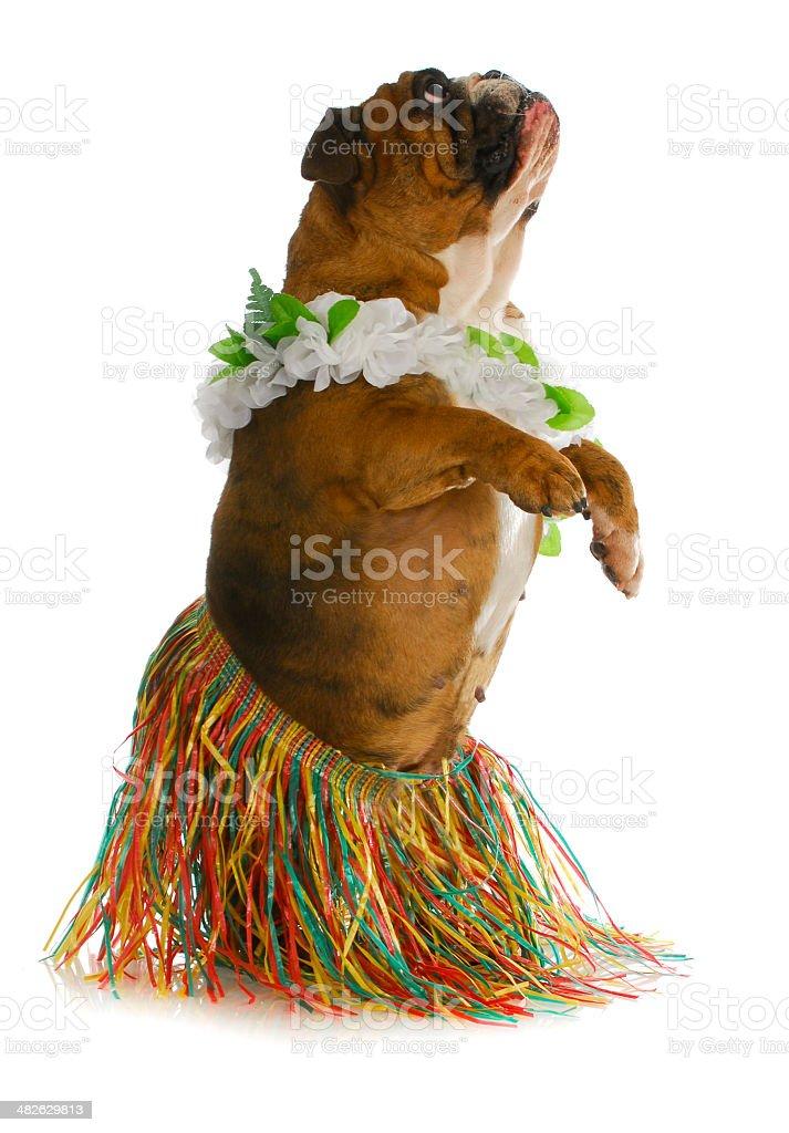 dog dancer stock photo