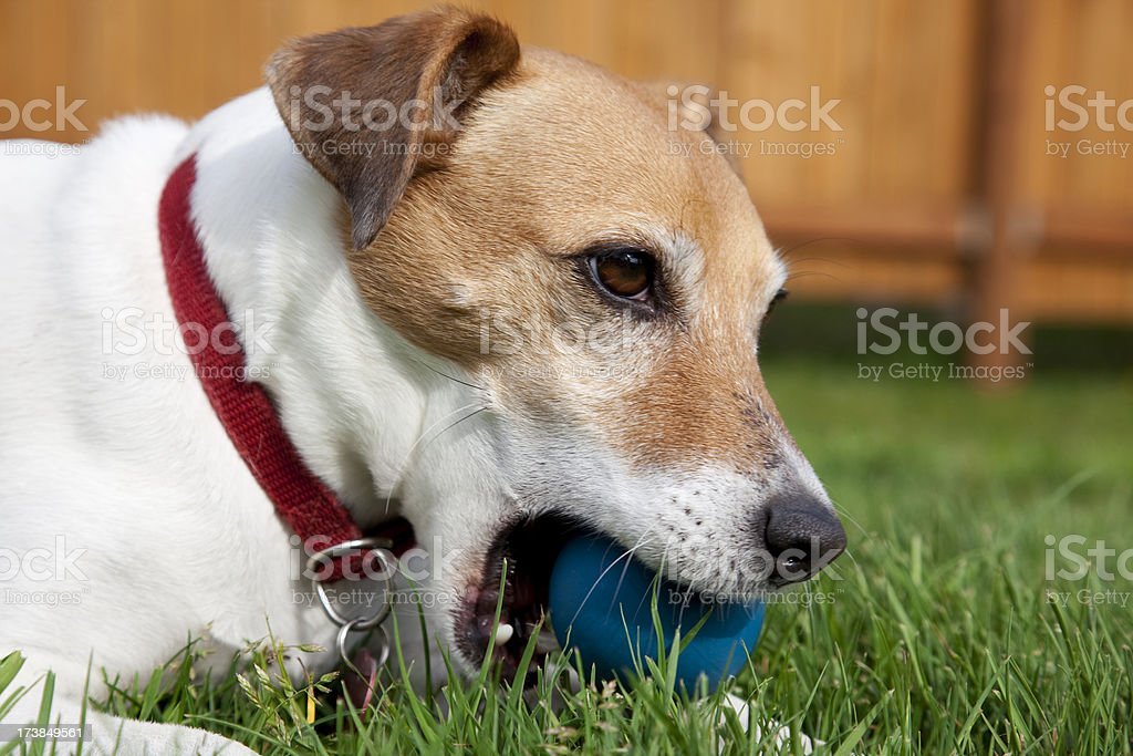 dog day afternoon stock photo