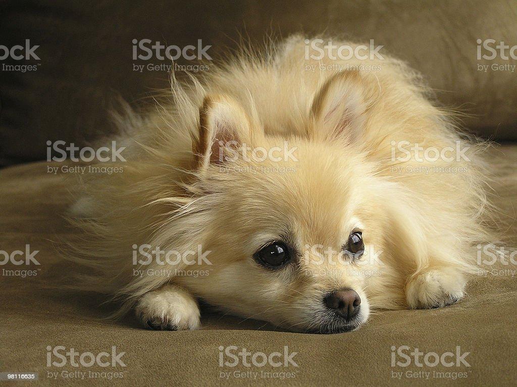 dog day dreams stock photo