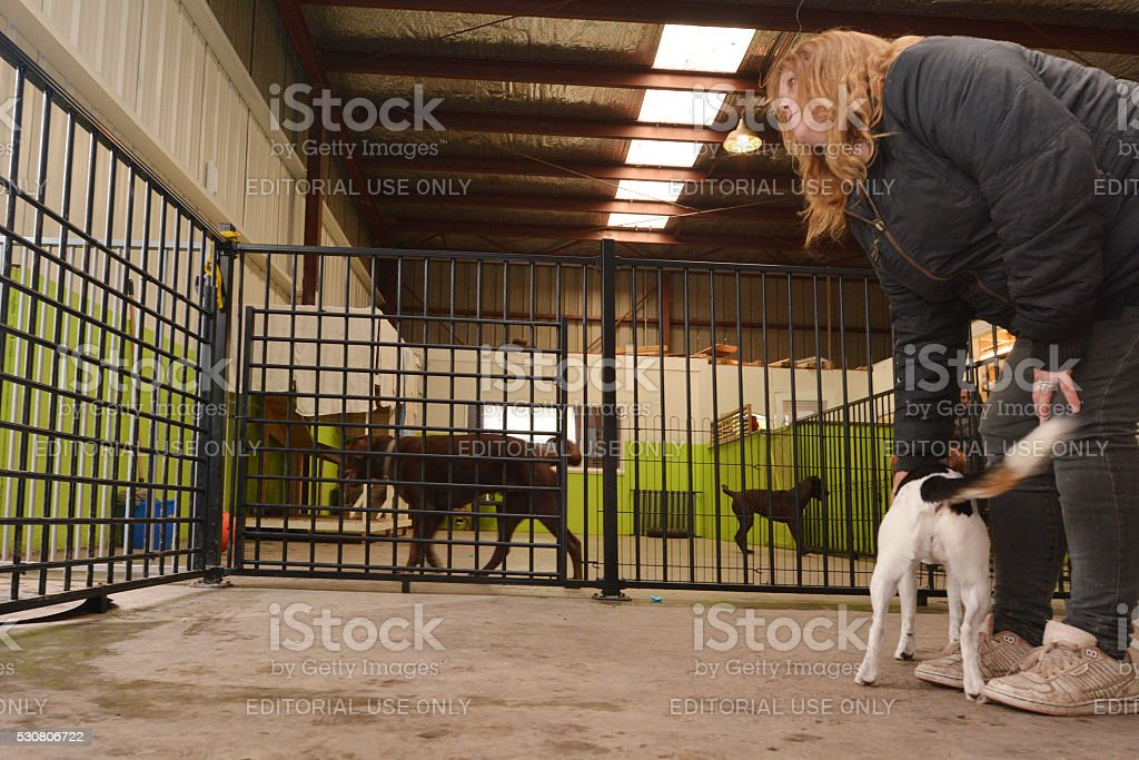 Dog daycare stock photo
