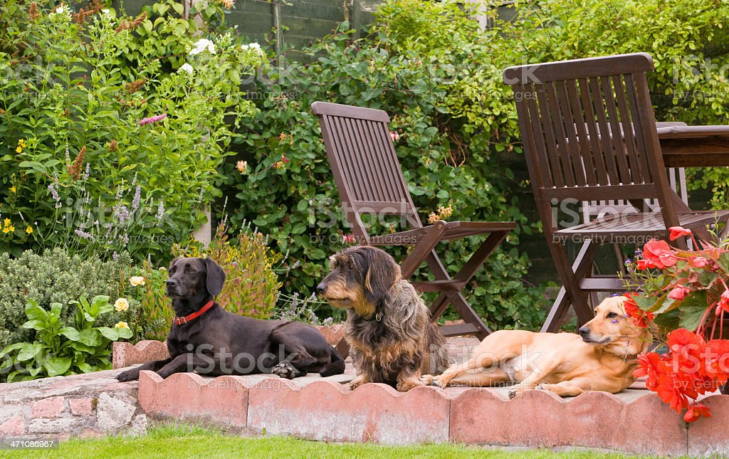 dog days of summer! stock photo