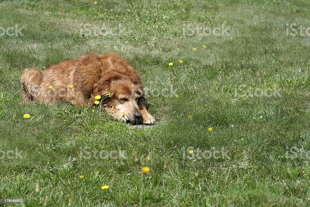 Dog Days of Summer with Copyspace stock photo