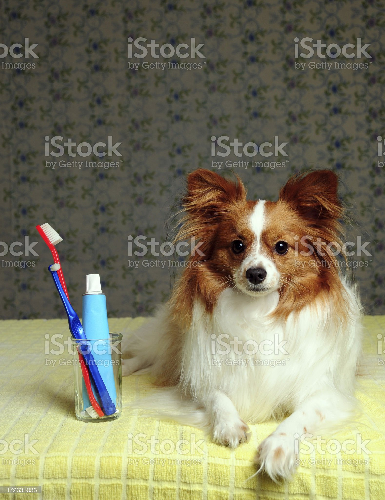 Dog Dental Care Time royalty-free stock photo