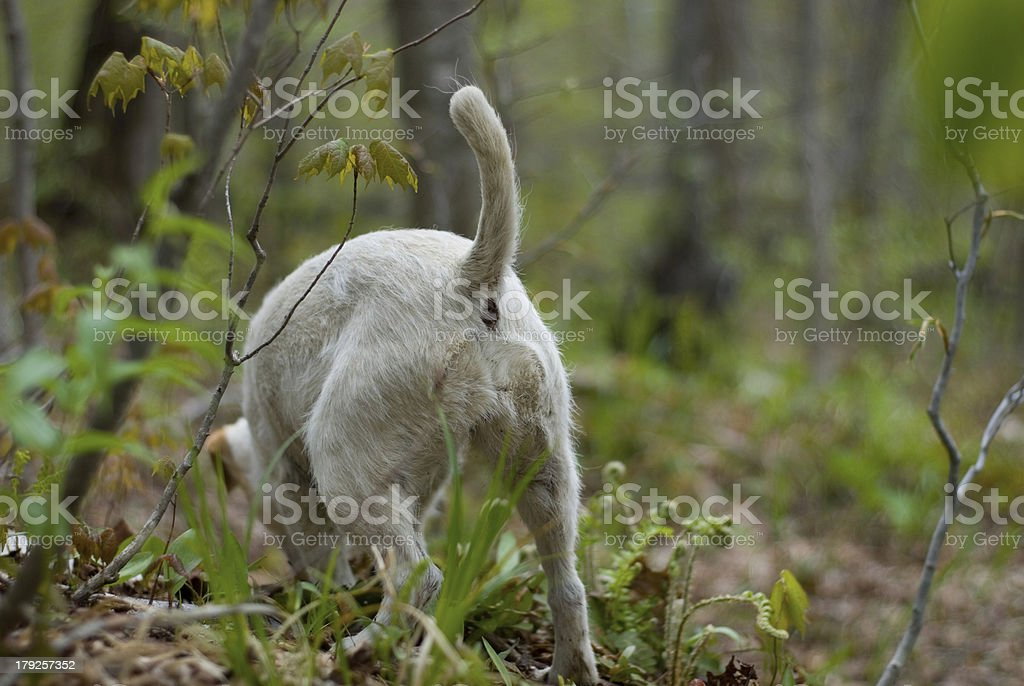 Dog Digging in the Ferns royalty-free stock photo