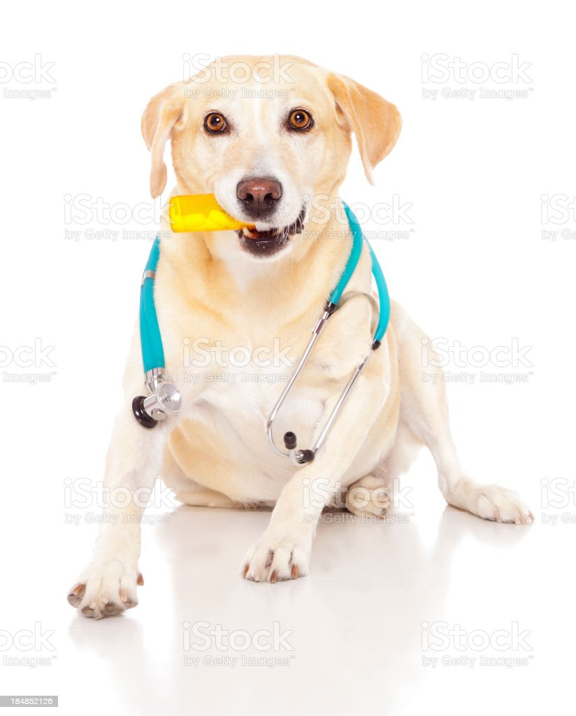 Dog Doctor royalty-free stock photo