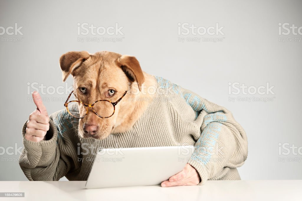 Dog does this is good with a digital tablet stock photo