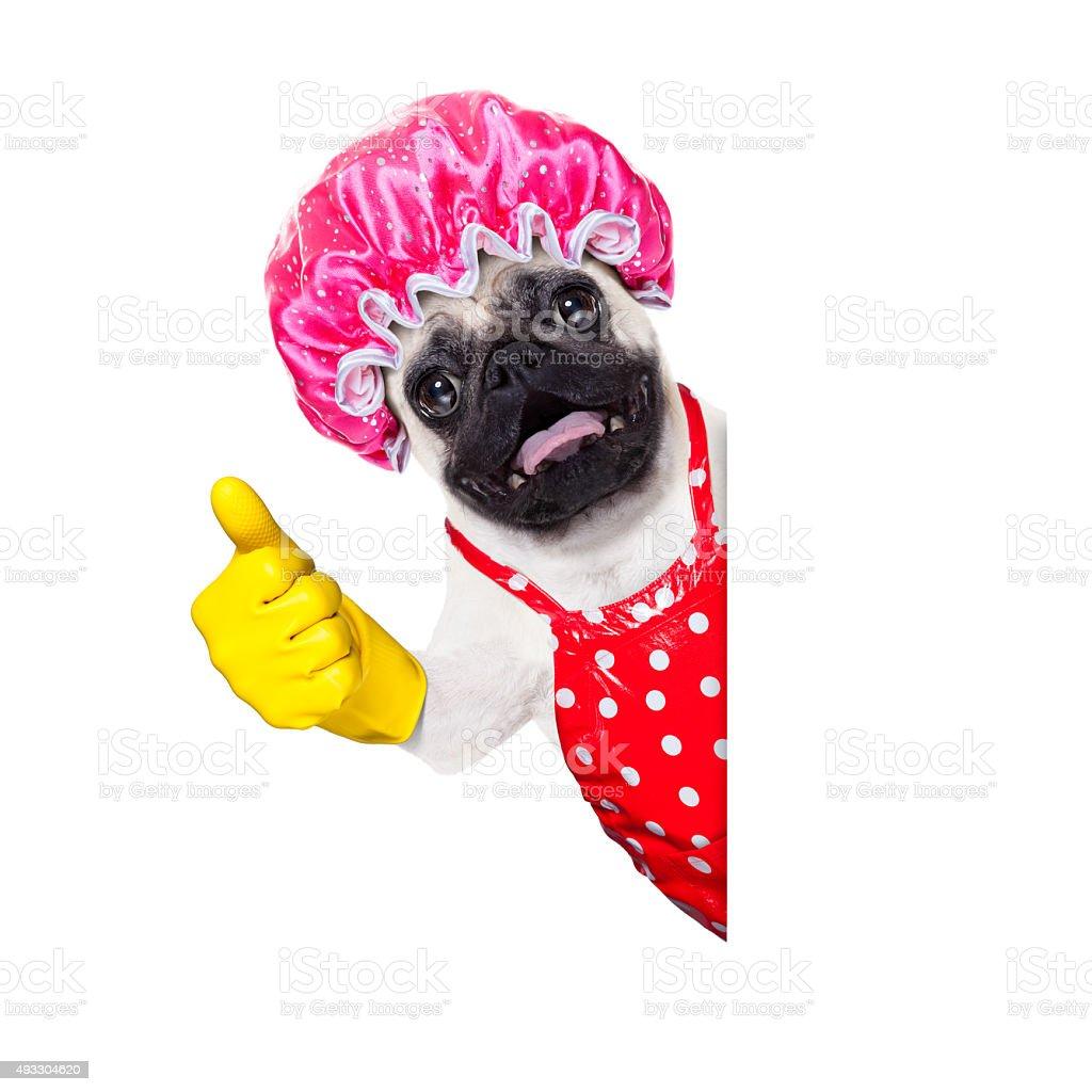 dog doing household chores stock photo
