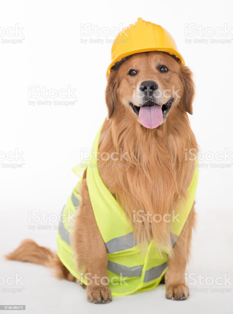 Dog dressed as a construction worker stock photo