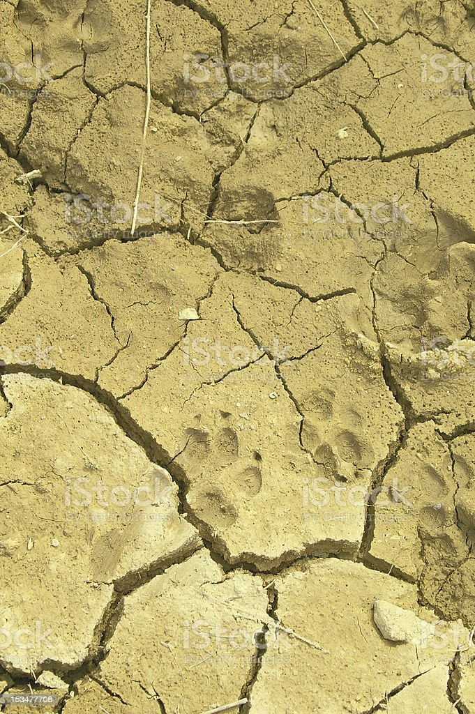 Dog Dry Desert royalty-free stock photo