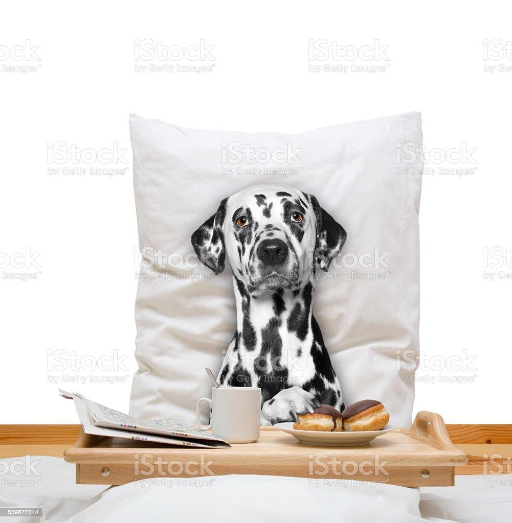 Landhotel Haus Waldeck: Hund Im Schlafzimmer. Bettwäsche Marken Seide Baumwolle