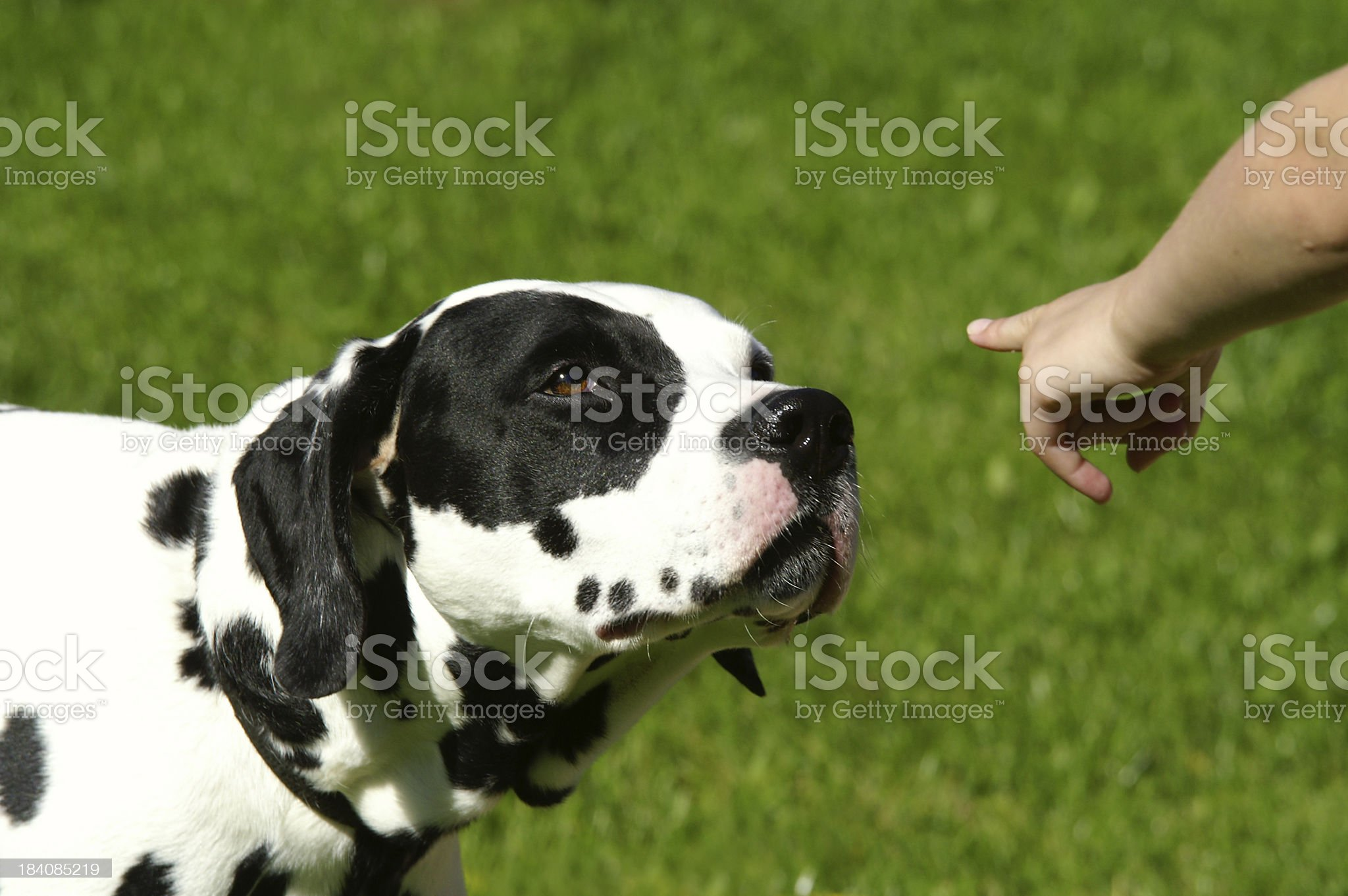 Dog education royalty-free stock photo