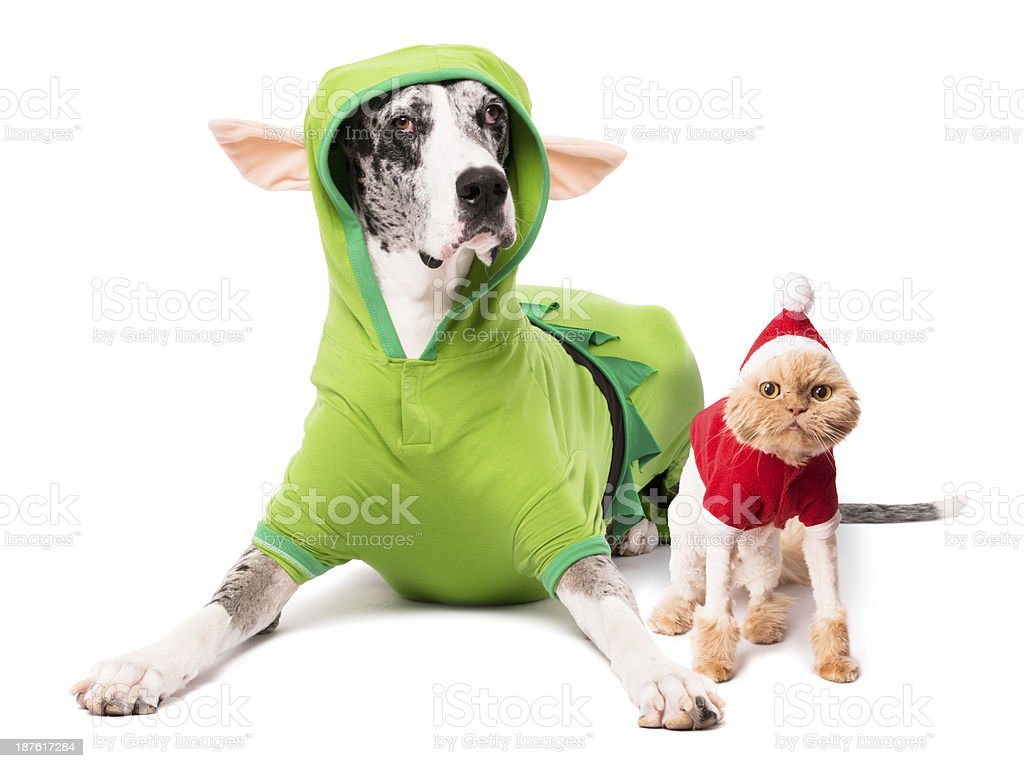 Dog Elf Costume Cat Santa Suit Isolated on White Background stock photo