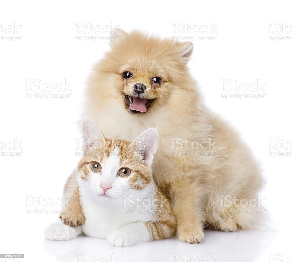 dog embraces a cat royalty-free stock photo