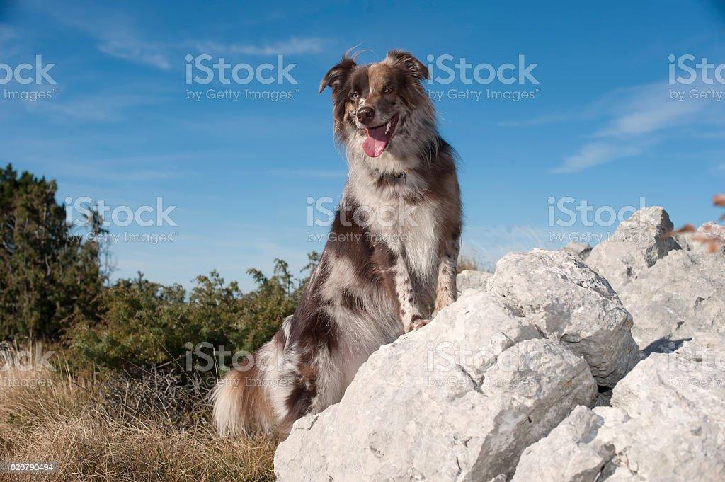Dog enjoying in mountains stock photo