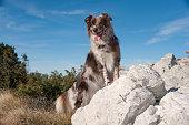 Dog enjoying in mountains