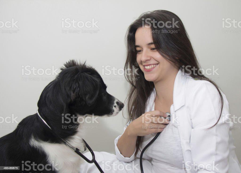 dog examinee a vet royalty-free stock photo