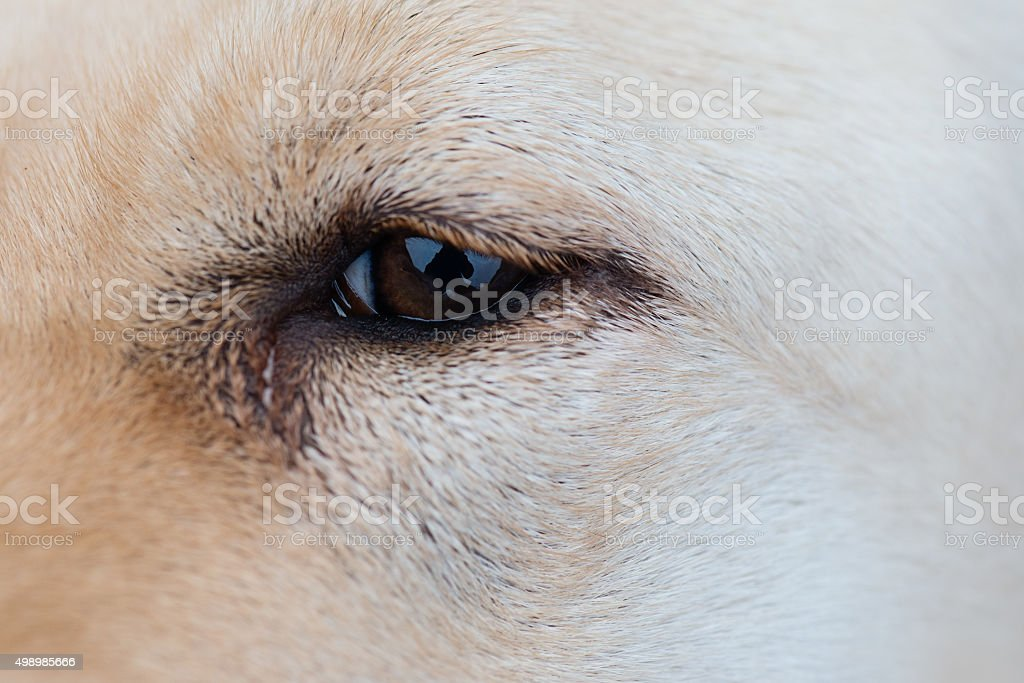 Dog Eye stock photo