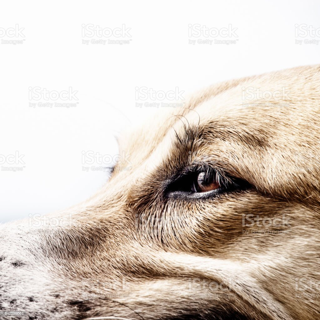 dog face, detail, close-up stock photo