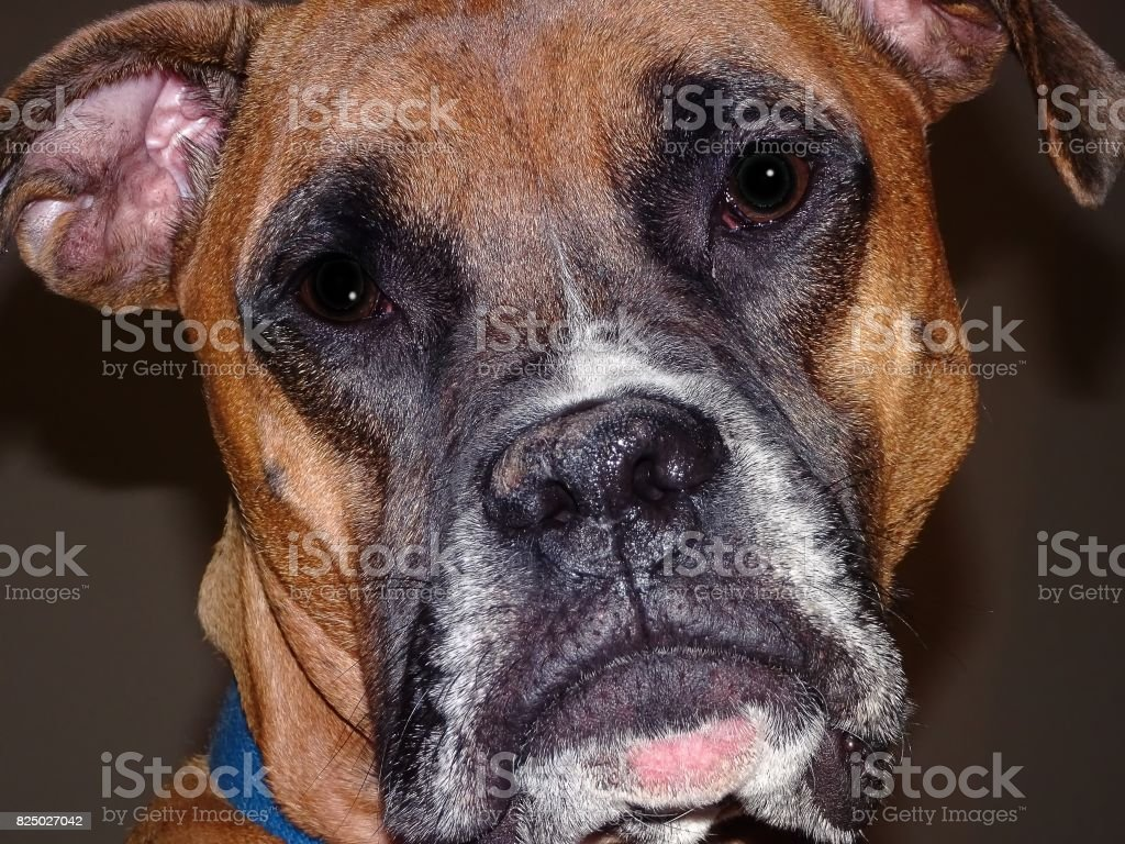 dog face in focus stock photo
