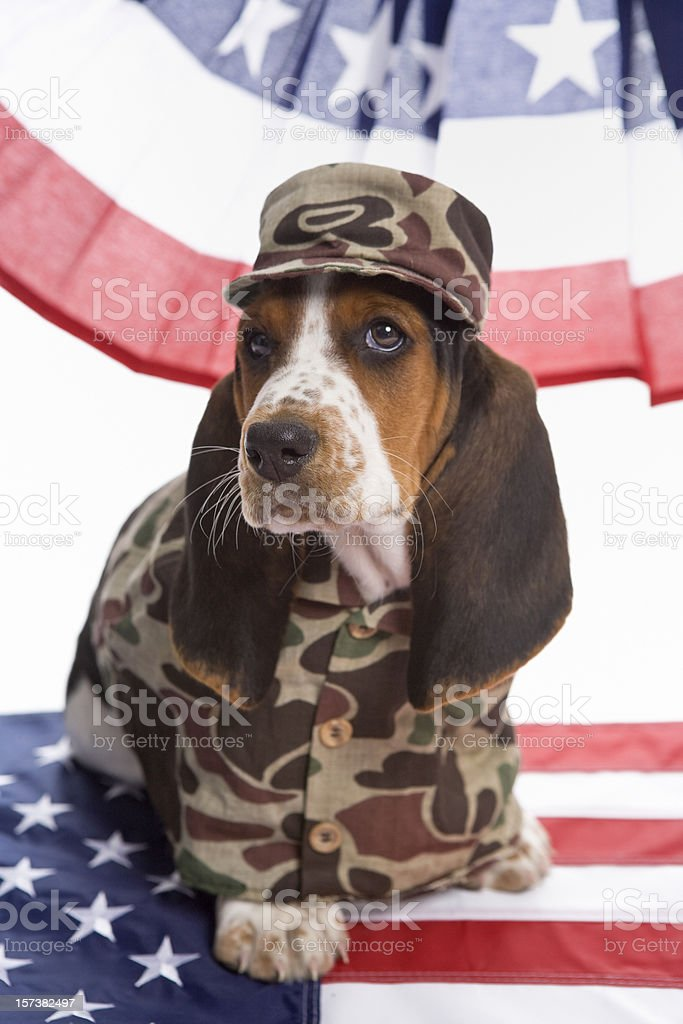 Dog Face Soldier stock photo
