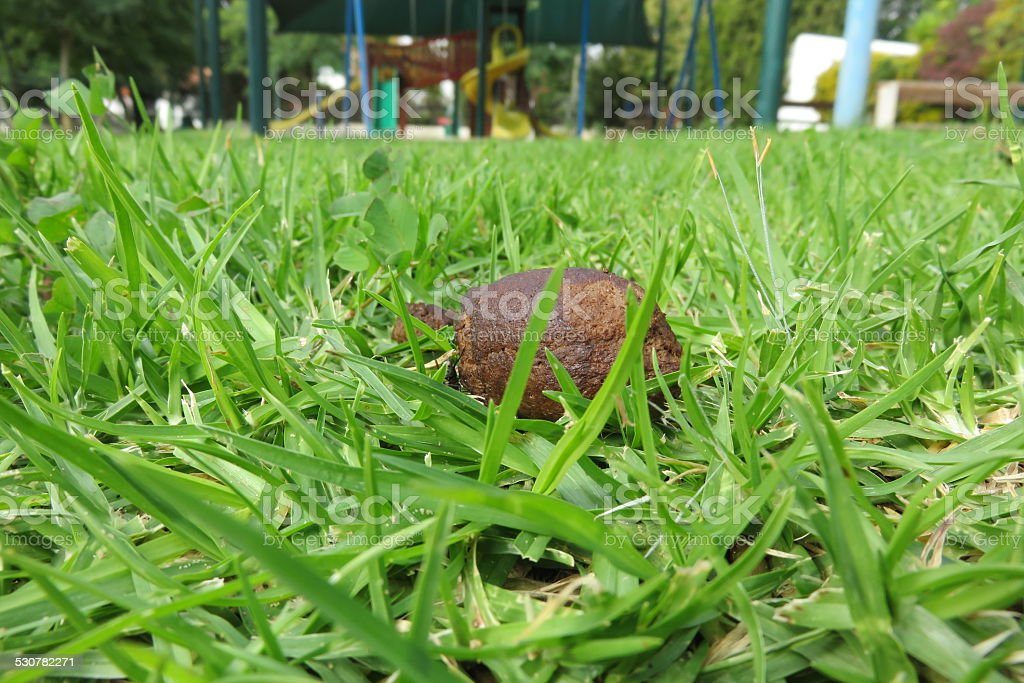 dog faeces in park grass stock photo