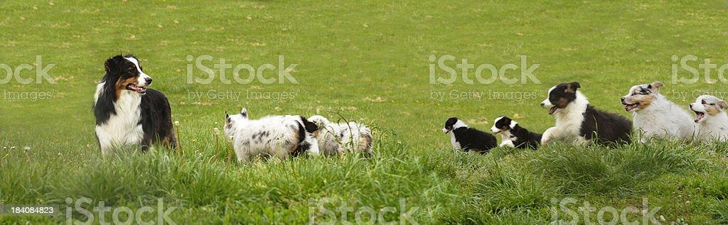 Dog Family royalty-free stock photo