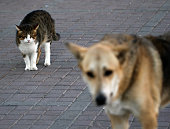 Dog, Fear, Terrified, Animal, Sheltering,terrier,cat,poodle