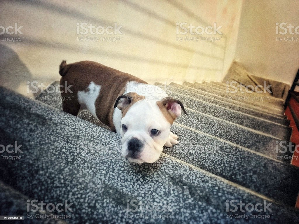 Dog fears the altitude stock photo