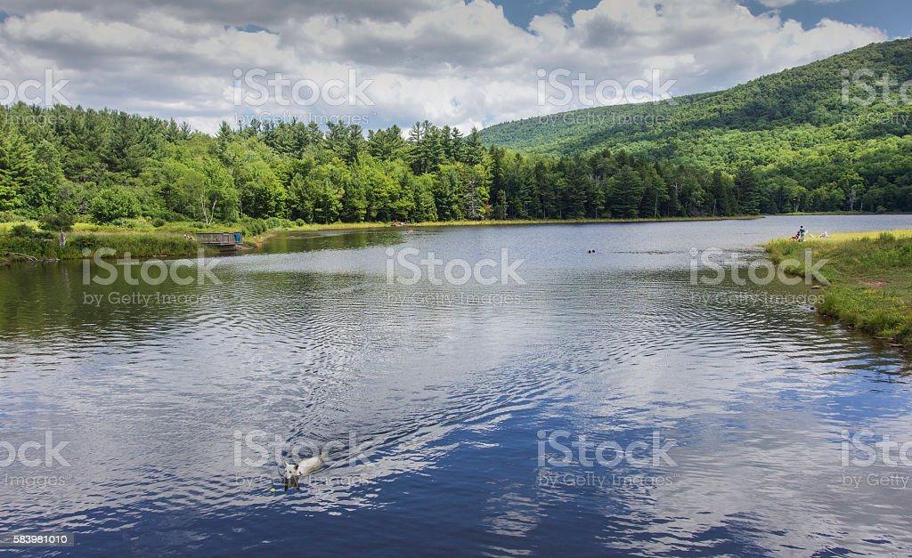 dog fetching ball swimming in lake stock photo