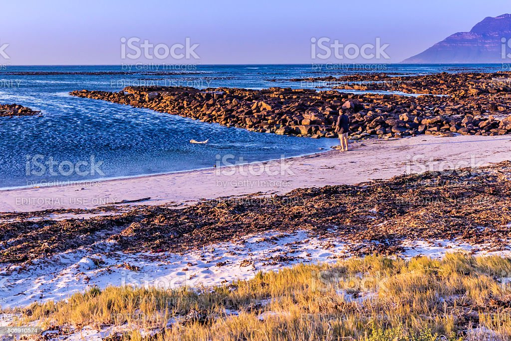Dog fetching for man at the seaside in Kommetjie stock photo