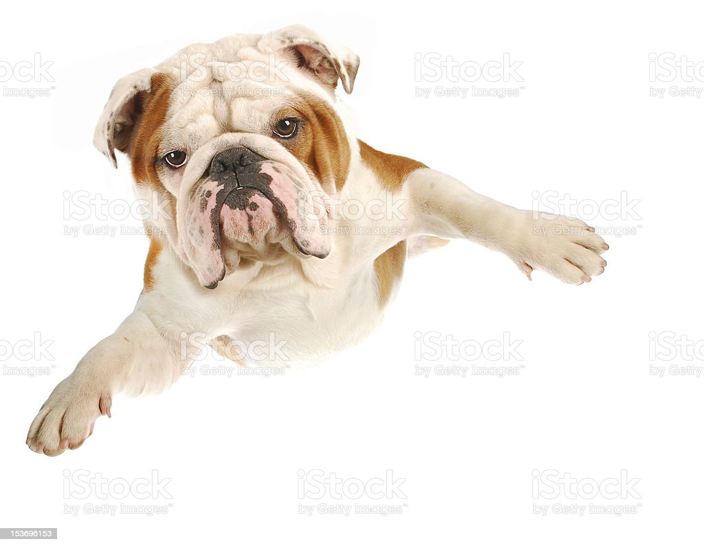 dog flying royalty-free stock photo
