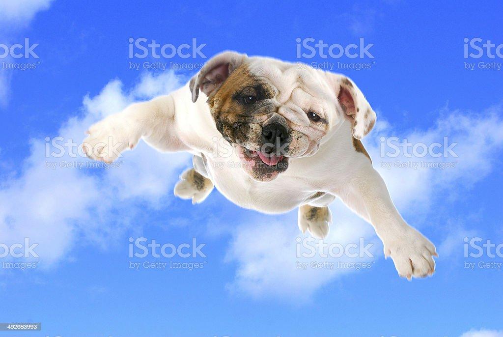 dog flying stock photo