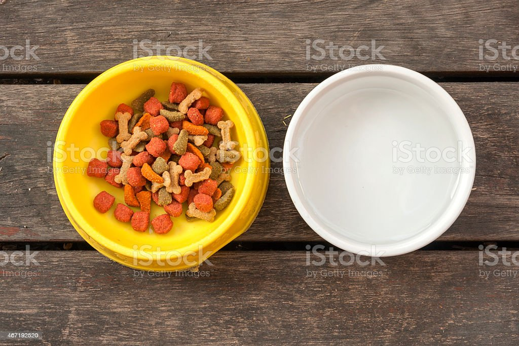 Dog food and water royalty-free stock photo